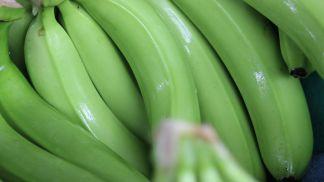 Top banana growers to adopt ethylene scavenging technology